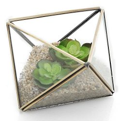 Diamond Shape Glass Prism Terrarium with Brass Rim / Air Plant Display Case / Tea Light Candle H ...