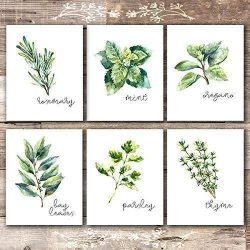 Kitchen Herbs Art Prints – Botanical Prints – (Set of 6) – Unframed – 8x10s