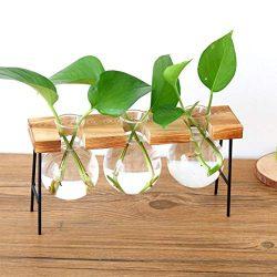 Hot Sale!DEESEE(TM)1Set Hydroponic Plant Transparent Vase Wooden Frame Coffee Shop Room Decor